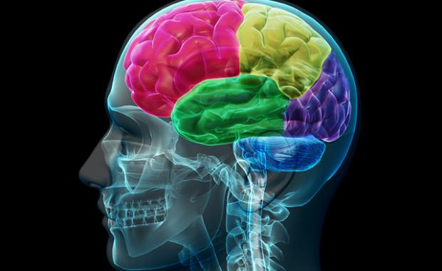 Bilde av en hjerne for å illustrere en tekst om smerte