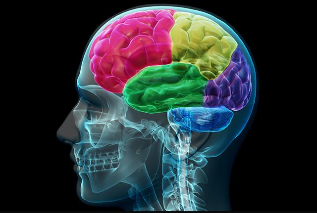 Fergebilde av hjernen for å illusterer en tekst om smerte